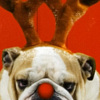 Bulldog with reindeer antlers and text: Really? printable Christmas bookmark