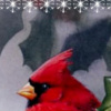 Cardinal bird on holly berry branch peacefully watching for holiday activity, with text: Merry Christmas printable Christmas bookmark